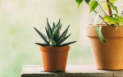 Опаковане на растения
